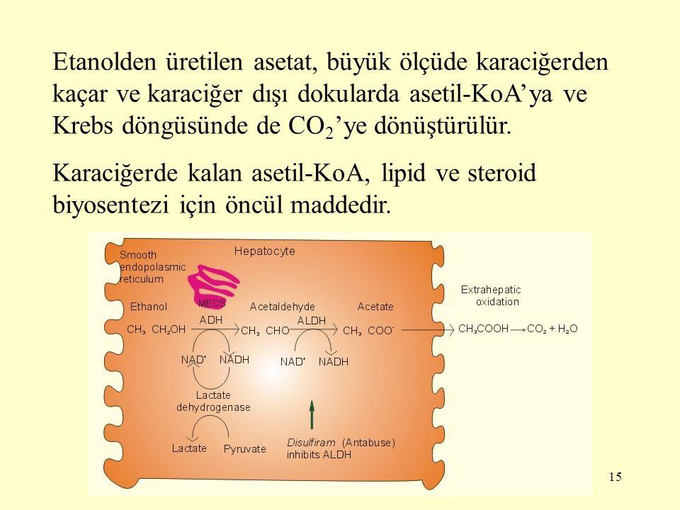 15 Etanolden üretilen asetat, büyük ölçüde karaciğerden kaçar ve karaciğer dışı dokularda asetil-KoA'ya ve Krebs döngüsünde de CO 2 'ye dönüştürülür.