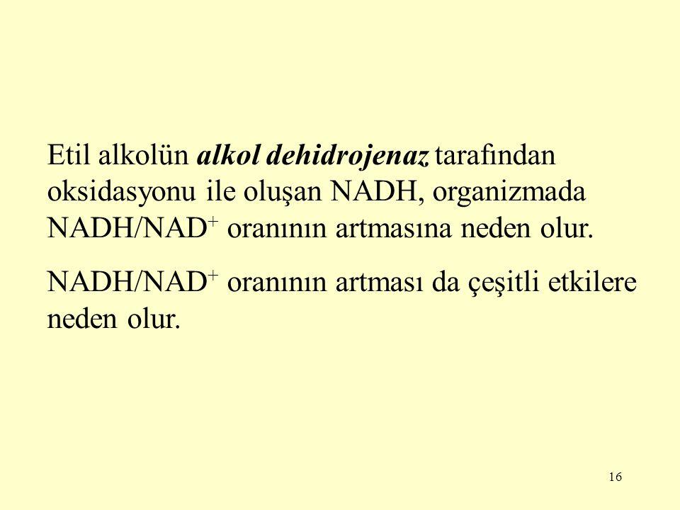 16 Etil alkolün alkol dehidrojenaz tarafından oksidasyonu ile oluşan NADH, organizmada NADH/NAD + oranının artmasına neden olur. NADH/NAD + oranının a