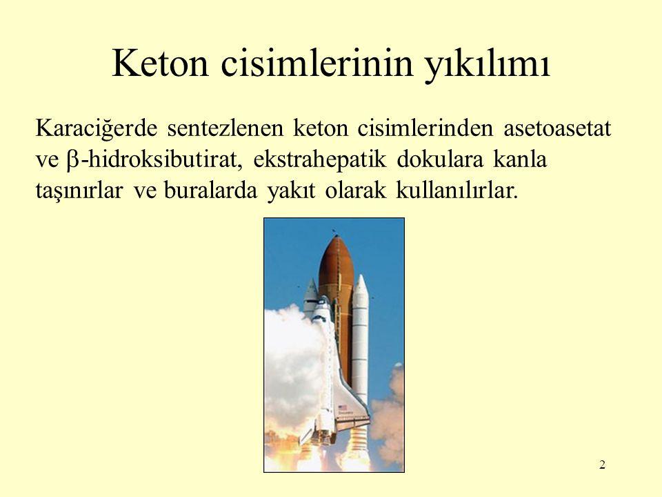 2 Keton cisimlerinin yıkılımı Karaciğerde sentezlenen keton cisimlerinden asetoasetat ve  -hidroksibutirat, ekstrahepatik dokulara kanla taşınırlar v