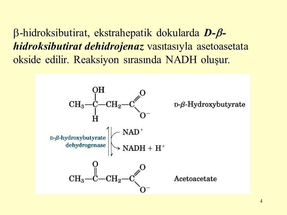 4  -hidroksibutirat, ekstrahepatik dokularda D-  - hidroksibutirat dehidrojenaz vasıtasıyla asetoasetata okside edilir. Reaksiyon sırasında NADH olu