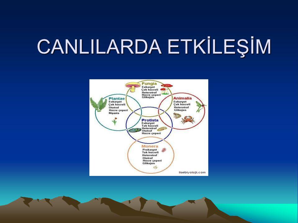 3.1.Canlılarda Beslenme Genel olarak incelendiğinde hayvanların ve bitkilerin benzer besleyici madde ve elementlere gereksinimi vardır.