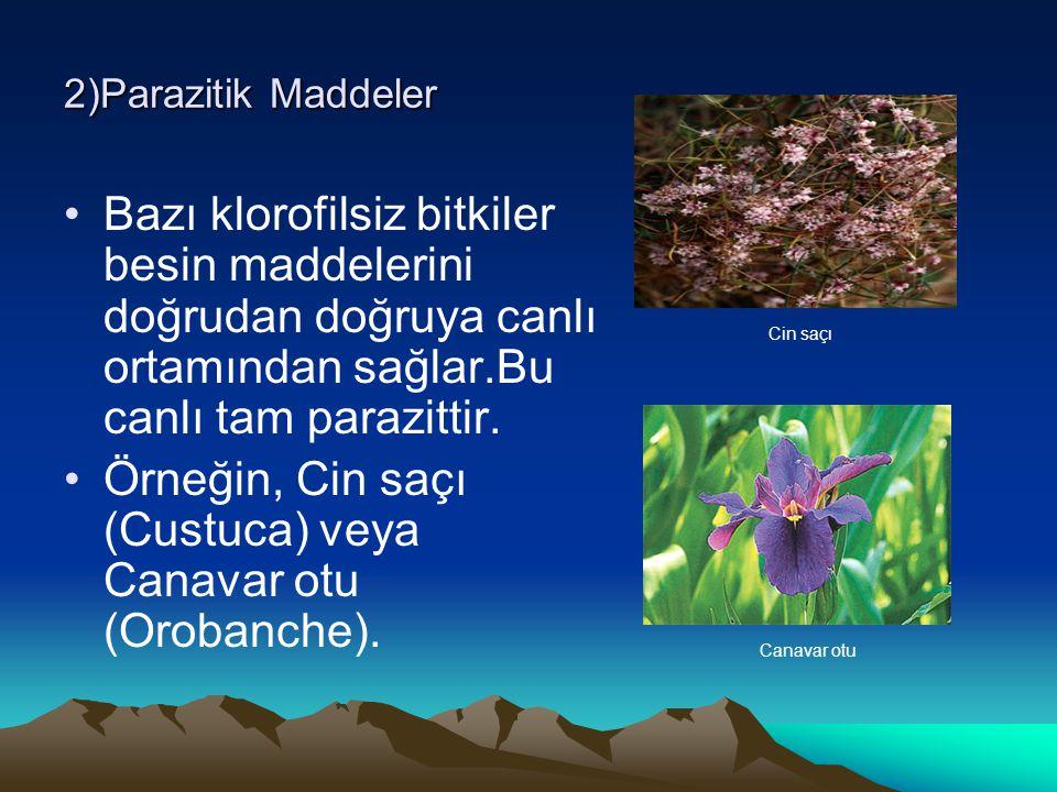 2)Parazitik Maddeler Bazı klorofilsiz bitkiler besin maddelerini doğrudan doğruya canlı ortamından sağlar.Bu canlı tam parazittir. Örneğin, Cin saçı (