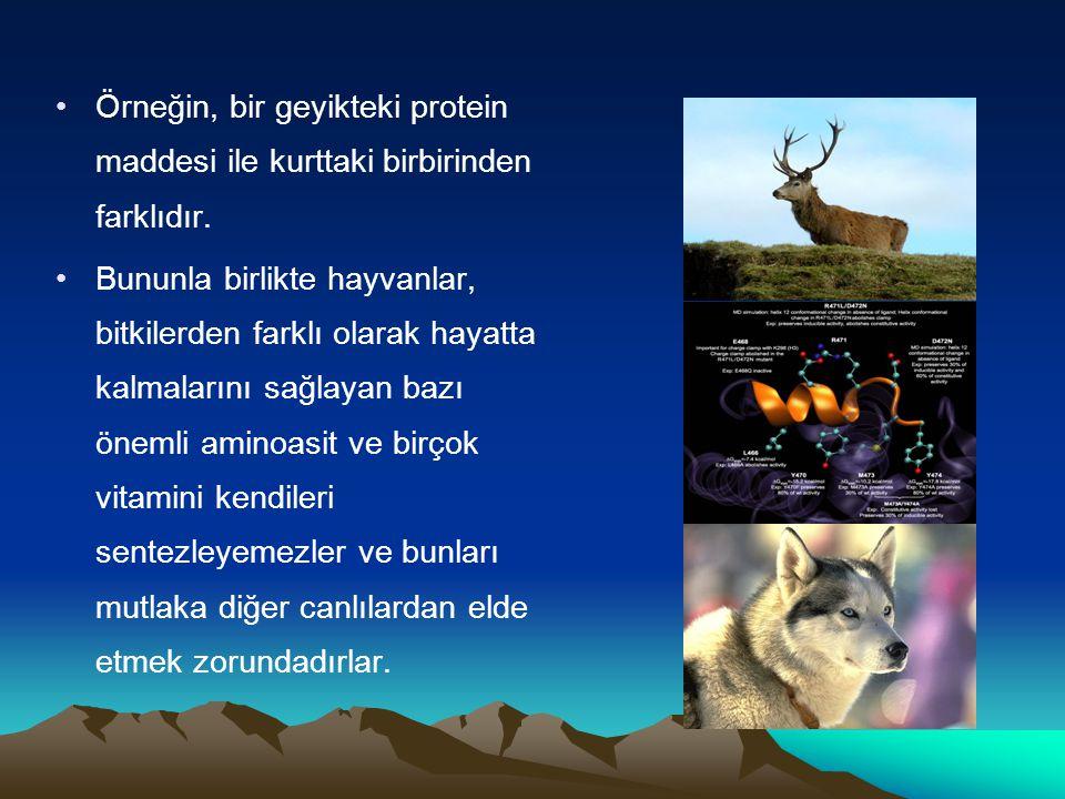 Örneğin, bir geyikteki protein maddesi ile kurttaki birbirinden farklıdır. Bununla birlikte hayvanlar, bitkilerden farklı olarak hayatta kalmalarını s