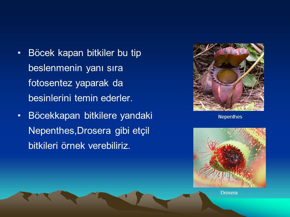 Hermafroditlik: Bazı hayvanların hem yumurta hem de sperm hücresini aynı evrede oluşturması durumudur.