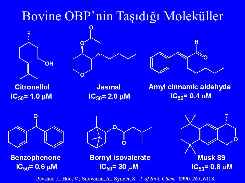 Bovine OBP'nin Taşıdığı Moleküller Pevsner, J.; Hou, V.; Snowman, A.; Synder, S. J. of Biol. Chem. 1990, 265, 6118.