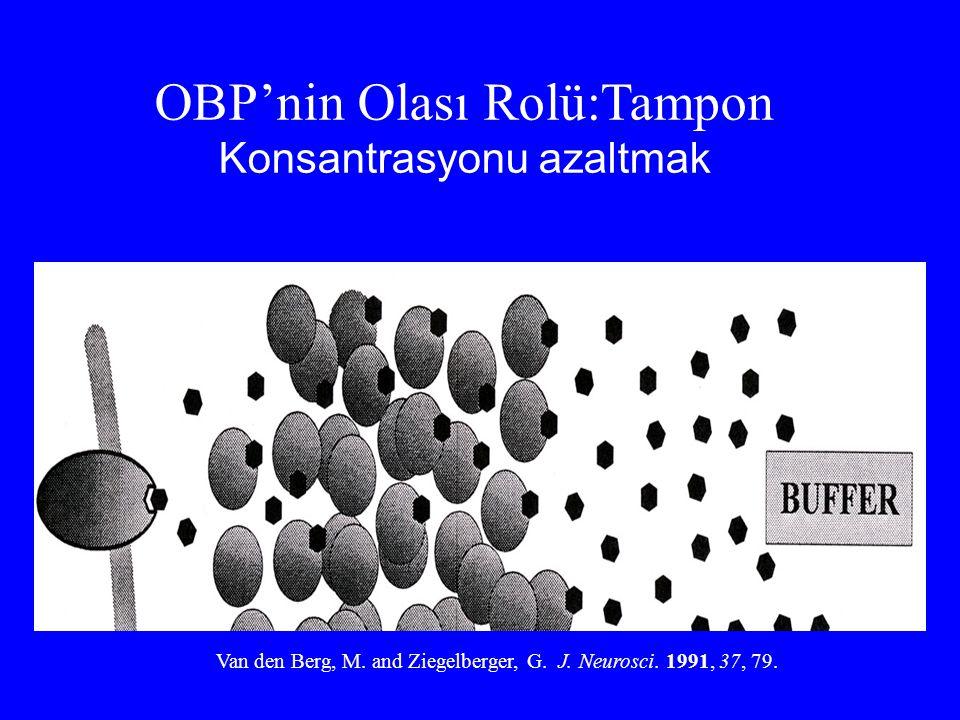 OBP'nin Olası Rolü:Tampon Konsantrasyonu azaltmak Van den Berg, M. and Ziegelberger, G. J. Neurosci. 1991, 37, 79.