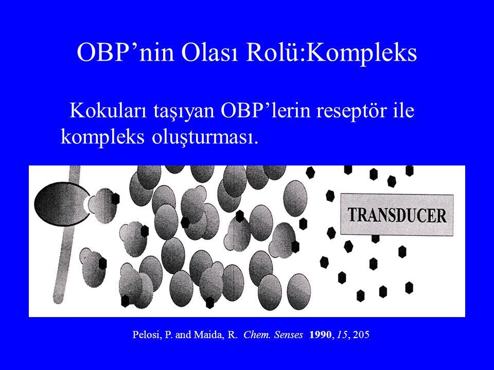 OBP'nin Olası Rolü:Kompleks Kokuları taşıyan OBP'lerin reseptör ile kompleks oluşturması. Pelosi, P. and Maida, R. Chem. Senses 1990, 15, 205.