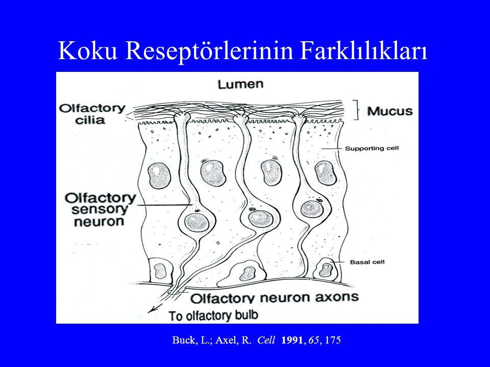 Koku Reseptörlerinin Farklılıkları Buck, L.; Axel, R. Cell 1991, 65, 175.