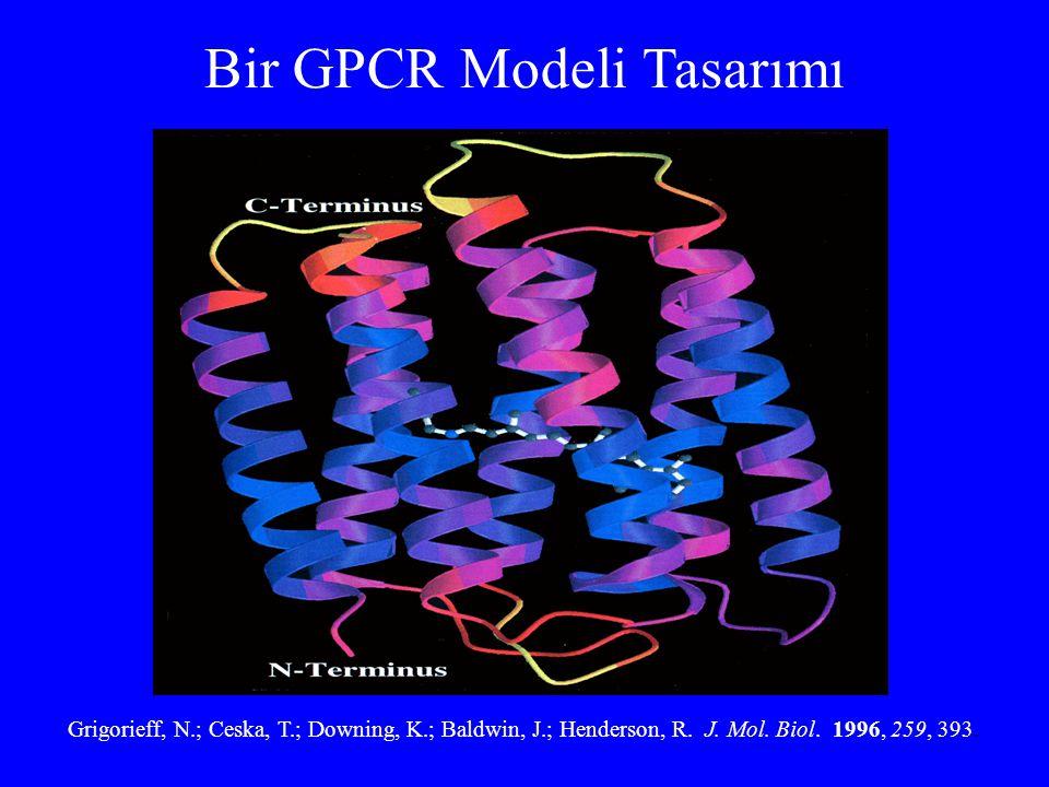 Bir GPCR Modeli Tasarımı Grigorieff, N.; Ceska, T.; Downing, K.; Baldwin, J.; Henderson, R. J. Mol. Biol. 1996, 259, 393.