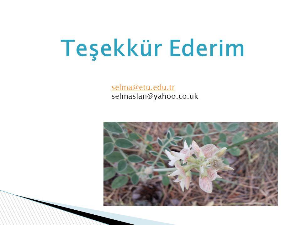 Teşekkür Ederim selma@etu.edu.tr selmaslan@yahoo.co.uk