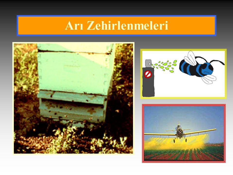Arılarda Pestisit Zehirlenmesi Belirtileri  Kovan önlerinde çok fazla ölü arının bulunması en önemli belirtidir.