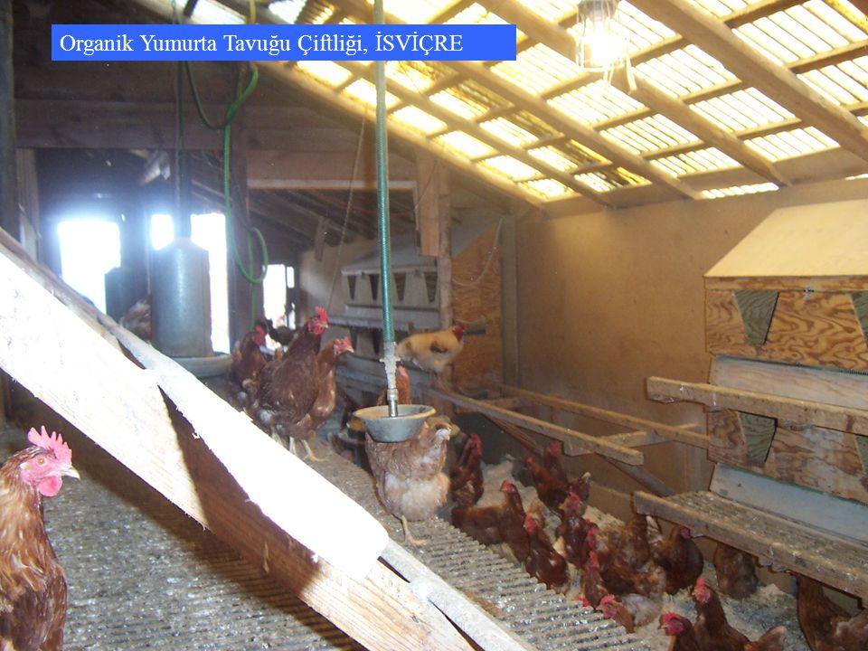 Organik Yumurta Tavuğu Çiftliği, İSVİÇRE