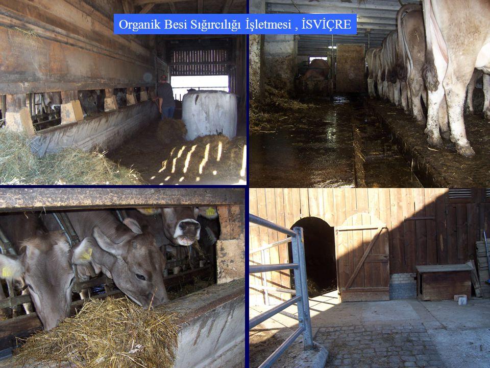 Organik Besi Sığırcılığı İşletmesi, İSVİÇRE
