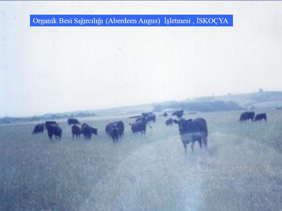 Organik Besi Sığırcılığı (Aberdeen Angus) İşletmesi, İSKOÇYA
