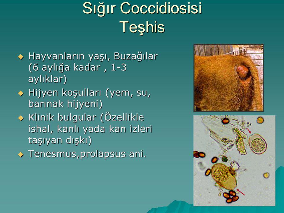 Sığır Coccidiosisi Teşhis  Hayvanların yaşı, Buzağılar (6 aylığa kadar, 1-3 aylıklar)  Hijyen koşulları (yem, su, barınak hijyeni)  Klinik bulgular (Özellikle ishal, kanlı yada kan izleri taşıyan dışkı)  Tenesmus,prolapsus ani.