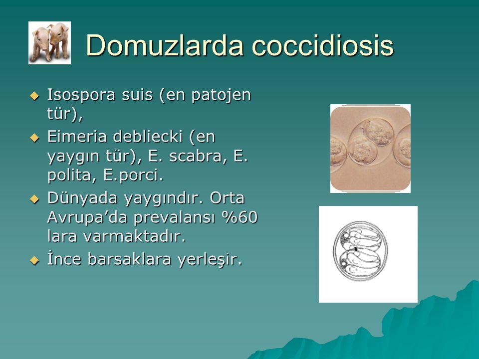 Domuzlarda coccidiosis  Isospora suis (en patojen tür),  Eimeria debliecki (en yaygın tür), E.