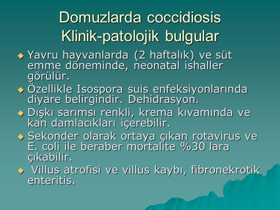 Domuzlarda coccidiosis Klinik-patolojik bulgular  Yavru hayvanlarda (2 haftalık) ve süt emme döneminde, neonatal ishaller görülür.
