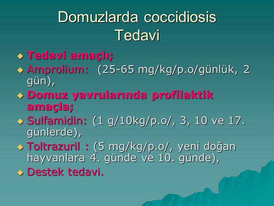 Domuzlarda coccidiosis Tedavi  Tedavi amaçlı;  Amprolium: (25-65 mg/kg/p.o/günlük, 2 gün),  Domuz yavrularında profilaktik amaçla;  Sulfamidin: (1 g/10kg/p.o/, 3, 10 ve 17.
