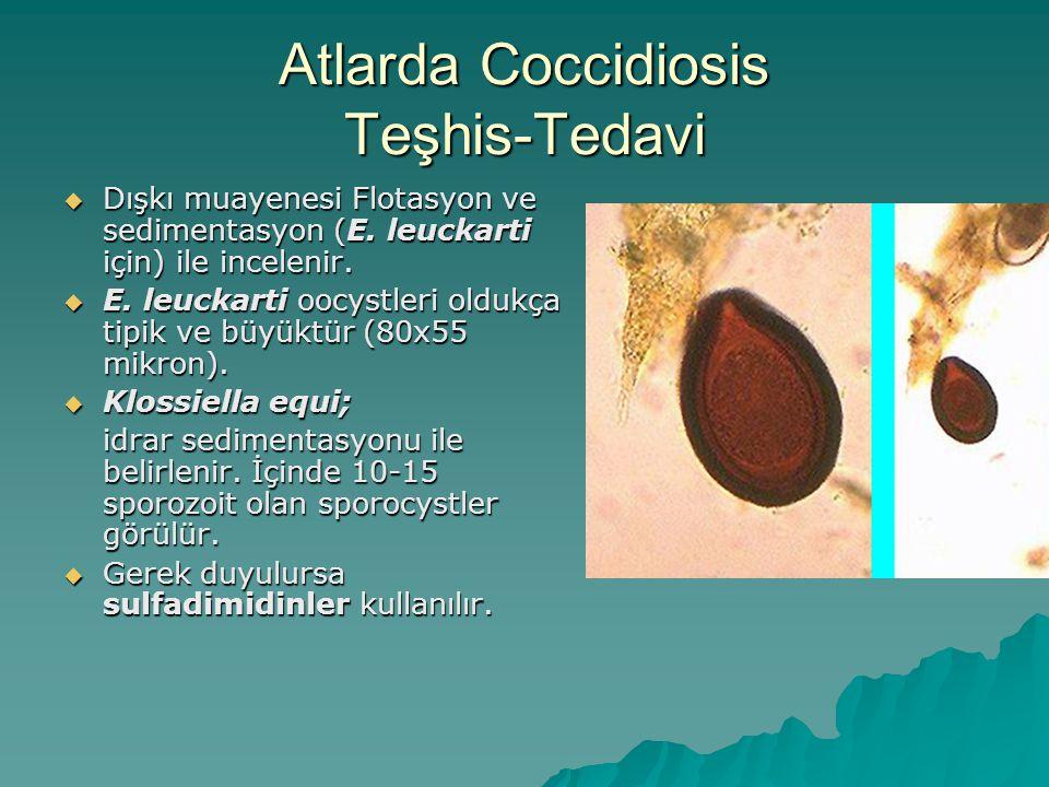 Atlarda Coccidiosis Teşhis-Tedavi  Dışkı muayenesi Flotasyon ve sedimentasyon (E.
