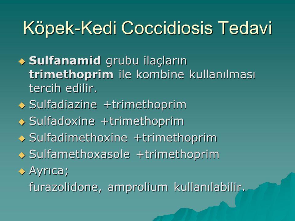 Köpek-Kedi Coccidiosis Tedavi  Sulfanamid grubu ilaçların trimethoprim ile kombine kullanılması tercih edilir.