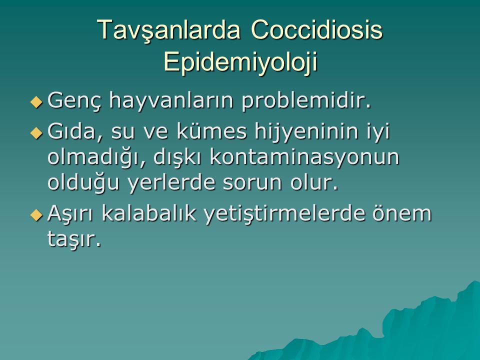 Tavşanlarda Coccidiosis Epidemiyoloji  Genç hayvanların problemidir.