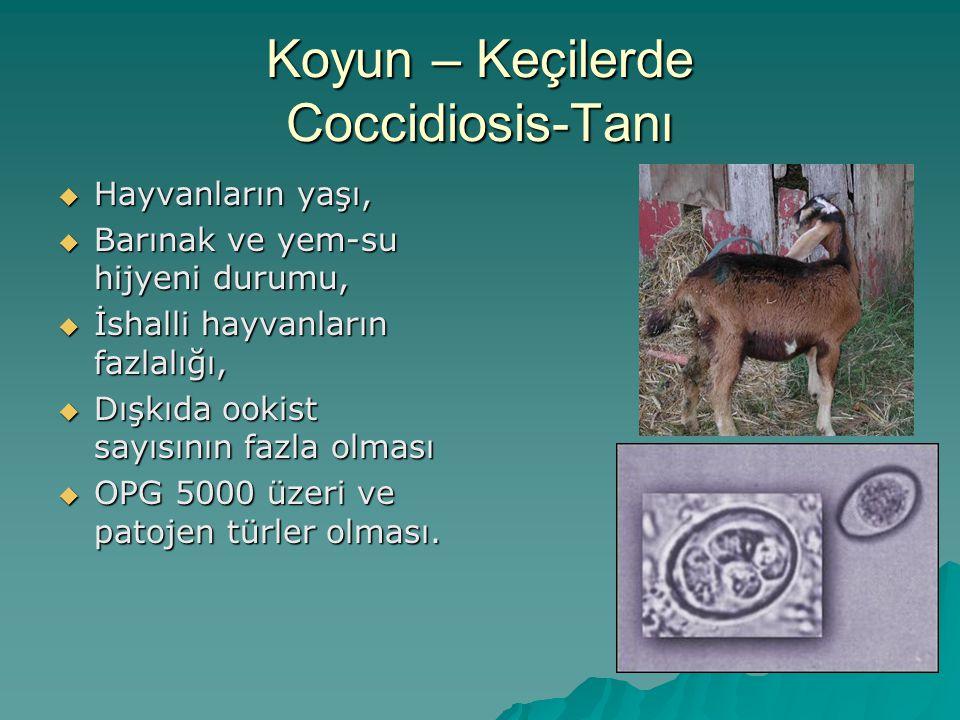 Koyun – Keçilerde Coccidiosis-Tanı  Hayvanların yaşı,  Barınak ve yem-su hijyeni durumu,  İshalli hayvanların fazlalığı,  Dışkıda ookist sayısının fazla olması  OPG 5000 üzeri ve patojen türler olması.