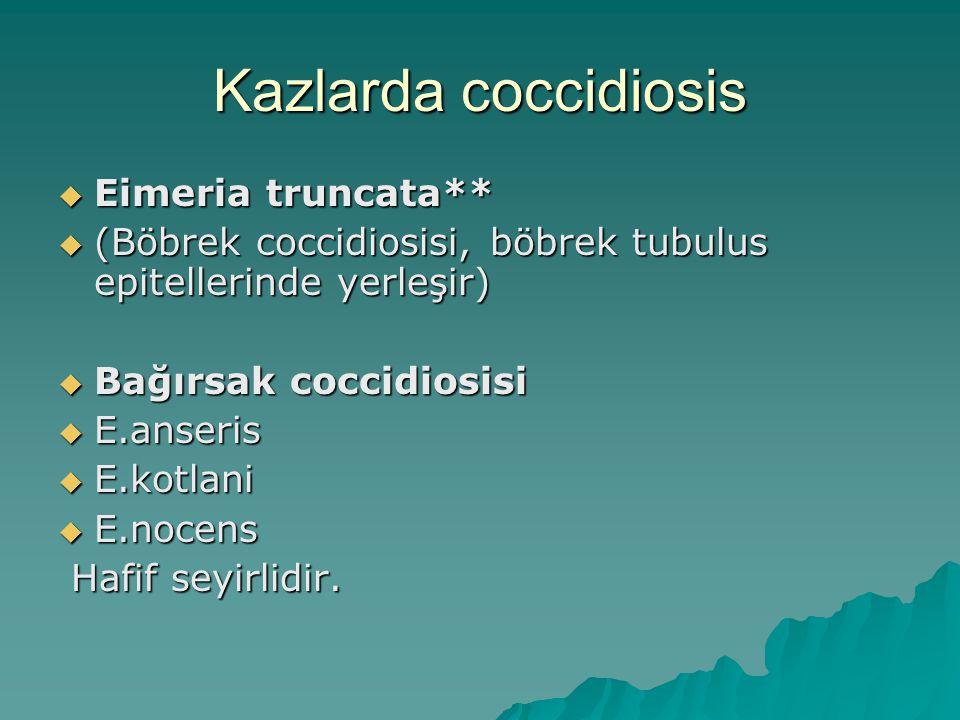 Kazlarda coccidiosis  Eimeria truncata**  (Böbrek coccidiosisi, böbrek tubulus epitellerinde yerleşir)  Bağırsak coccidiosisi  E.anseris  E.kotlani  E.nocens Hafif seyirlidir.