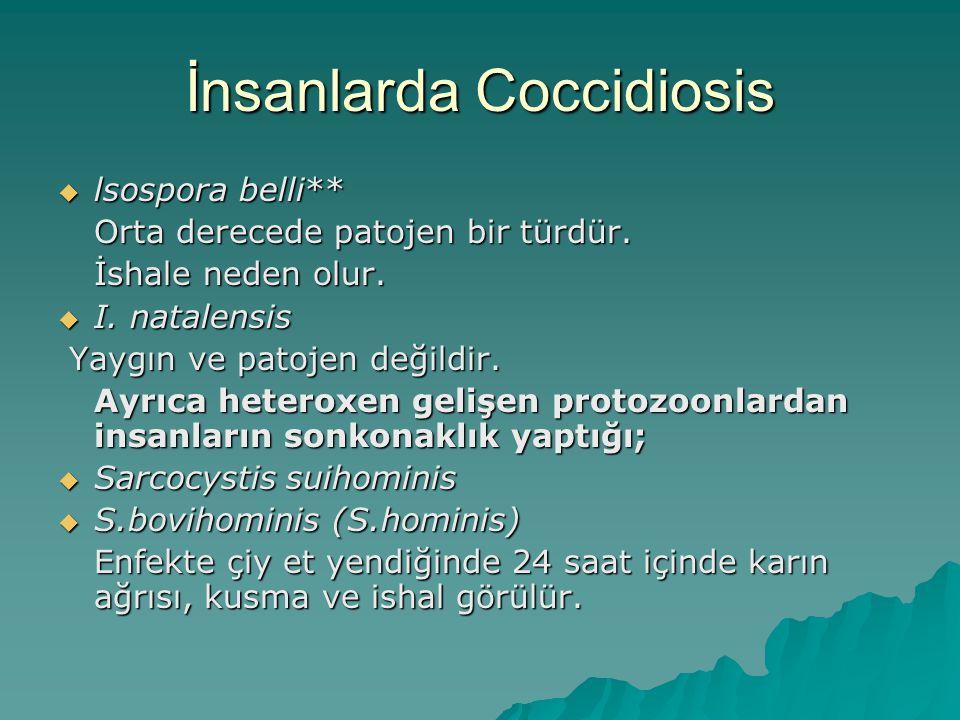 İnsanlarda Coccidiosis  lsospora belli** Orta derecede patojen bir türdür.