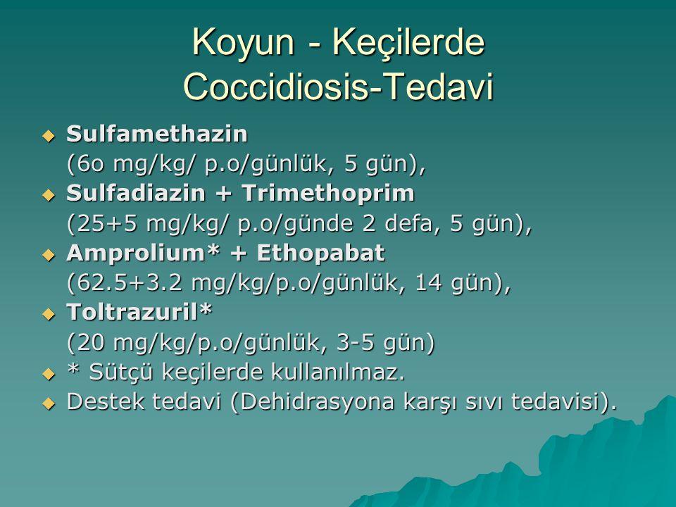 Tavuklarda Coccidiosis- Epidemiyoloji  Civcivlerde sorun olur,  Yer tipi yetiştirmelerde sorun olur,  Kafes tipi yumurtacılarda sorun yaratmaz.