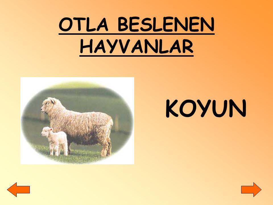 Sığır, koyun ve yılan derisinden; yapımında yararlanılır. Kemer Çanta Ayakkabı