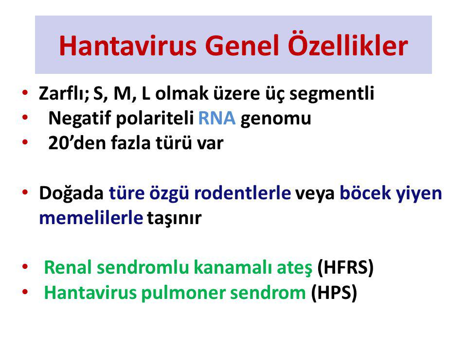 Türkiye- Hantavirüs- Rodentler A.flavicollis A. agrarius C.
