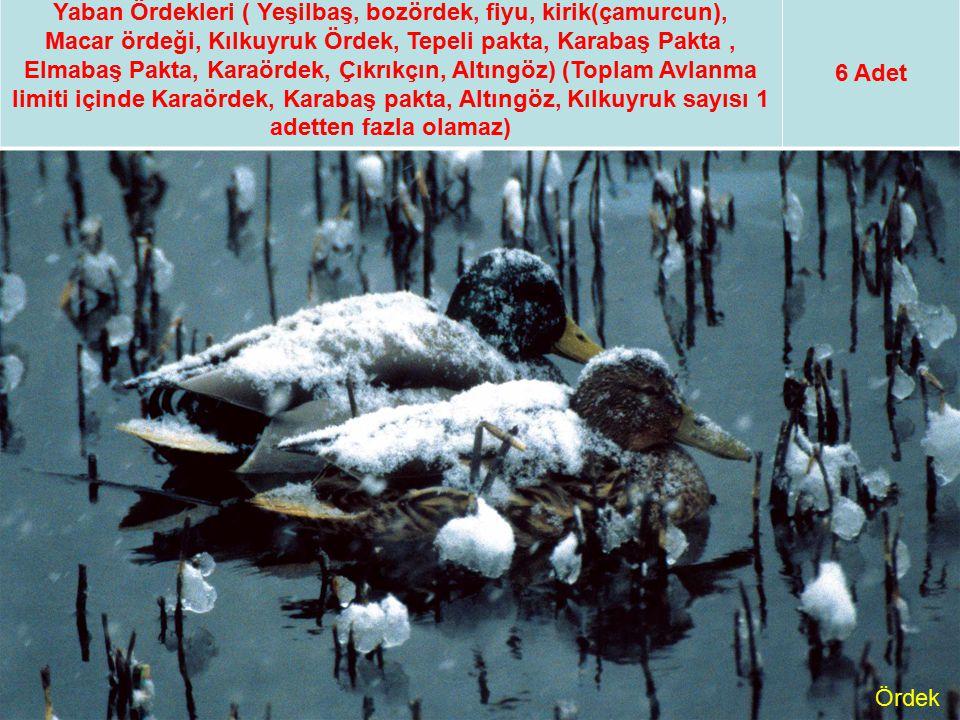 Yaban Ördekleri ( Yeşilbaş, bozördek, fiyu, kirik(çamurcun), Macar ördeği, Kılkuyruk Ördek, Tepeli pakta, Karabaş Pakta, Elmabaş Pakta, Karaördek, Çık