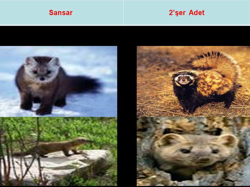 Sansar2'şer Adet