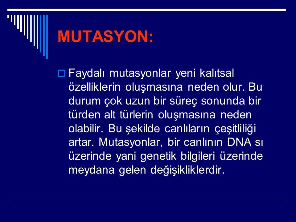 MUTASYON:  Faydalı mutasyonlar yeni kalıtsal özelliklerin oluşmasına neden olur. Bu durum çok uzun bir süreç sonunda bir türden alt türlerin oluşması