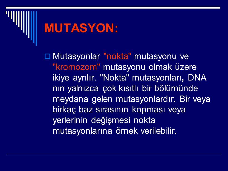 MUTASYON:  Mutasyonlar