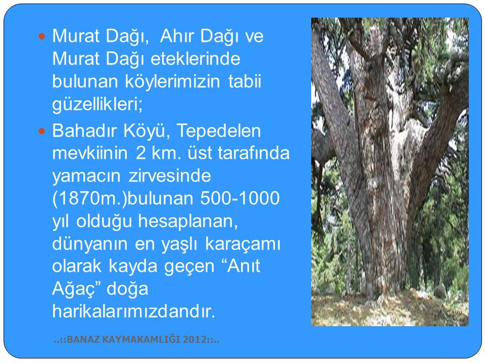 Hamambo ğ azı Ankara- İ zmir yolu üzerinde, Banaz ilçesine 7 km uzaklıktadır. Güneyde ormanlık bir tepe üzerinde olup kaplıcada Gazoz, Sarıkız, Karakı