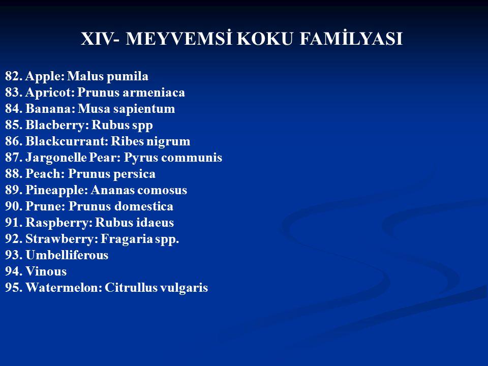 Doç Dr.Celalettin R. ÇELEBİ & Dr. Nalan AKYOL 82.