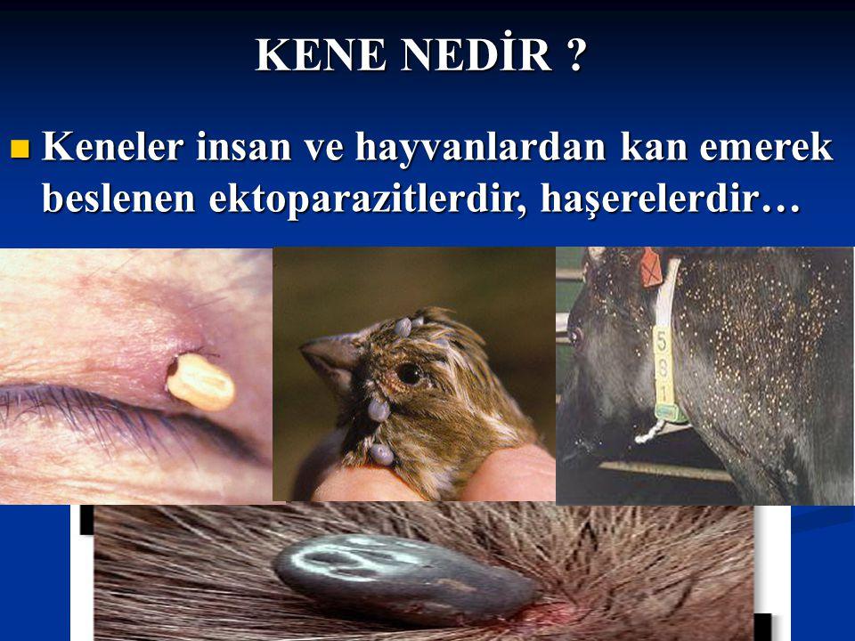 Doç Dr.Celalettin R. ÇELEBİ & Dr. Nalan AKYOL KENE NEDİR .