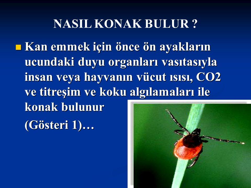 Doç Dr.Celalettin R. ÇELEBİ & Dr. Nalan AKYOL NASIL KONAK BULUR .