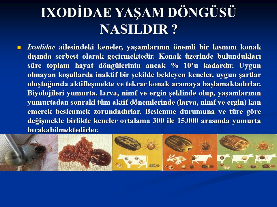 Doç Dr.Celalettin R. ÇELEBİ & Dr. Nalan AKYOL IXODİDAE YAŞAM DÖNGÜSÜ NASILDIR .