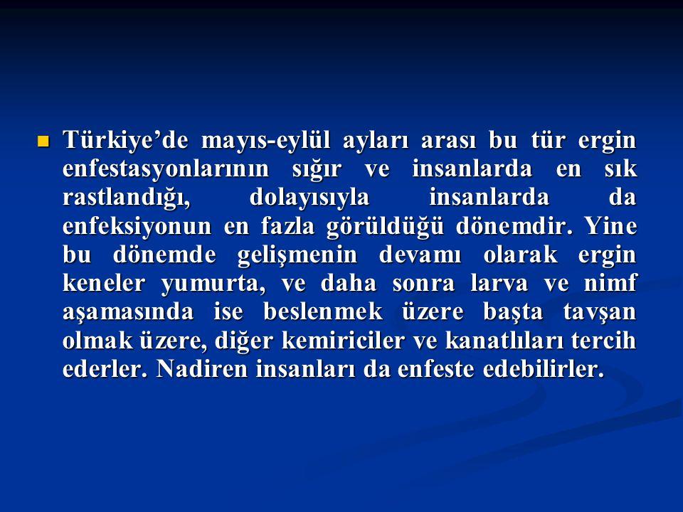Doç Dr. Celalettin R. ÇELEBİ & Dr. Nalan AKYOL Türkiye'de mayıs-eylül ayları arası bu tür ergin enfestasyonlarının sığır ve insanlarda en sık rastland