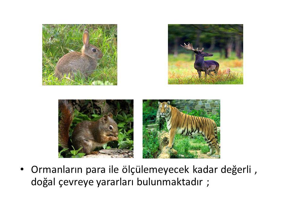 Ormanların para ile ölçülemeyecek kadar değerli, doğal çevreye yararları bulunmaktadır ;