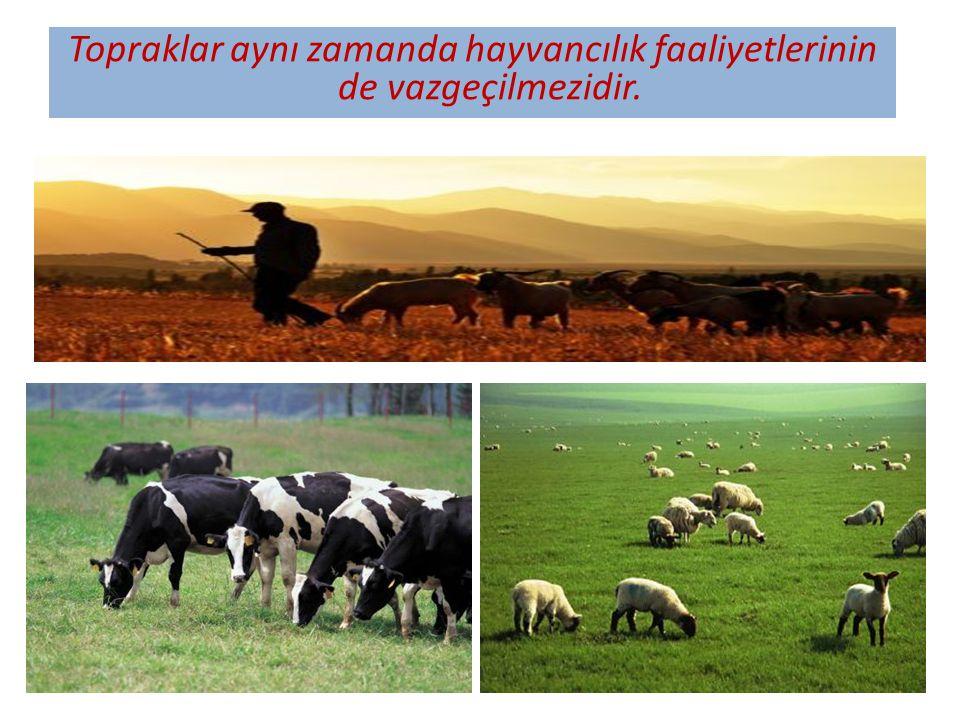 Topraklar aynı zamanda hayvancılık faaliyetlerinin de vazgeçilmezidir.