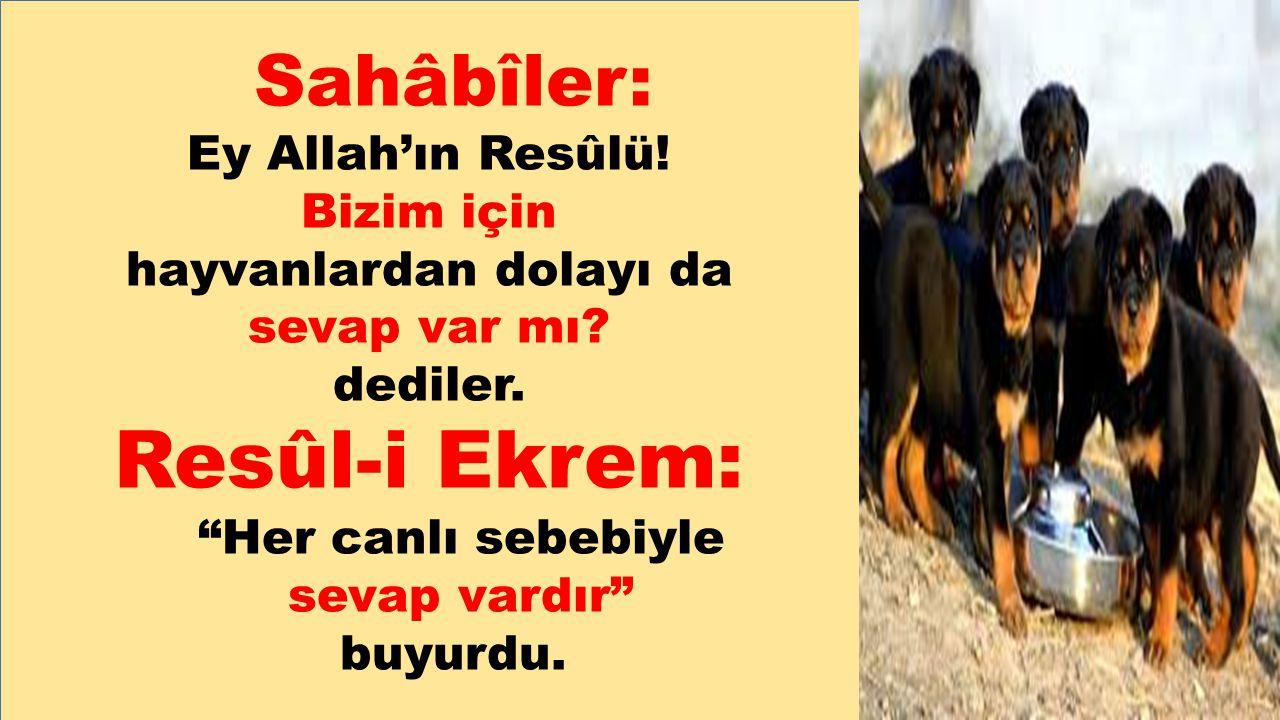 """Sahâbîler: Ey Allah'ın Resûlü! Bizim için hayvanlardan dolayı da sevap var mı? dediler. Resûl-i Ekrem: """"Her canlı sebebiyle sevap vardır"""" buyurdu."""