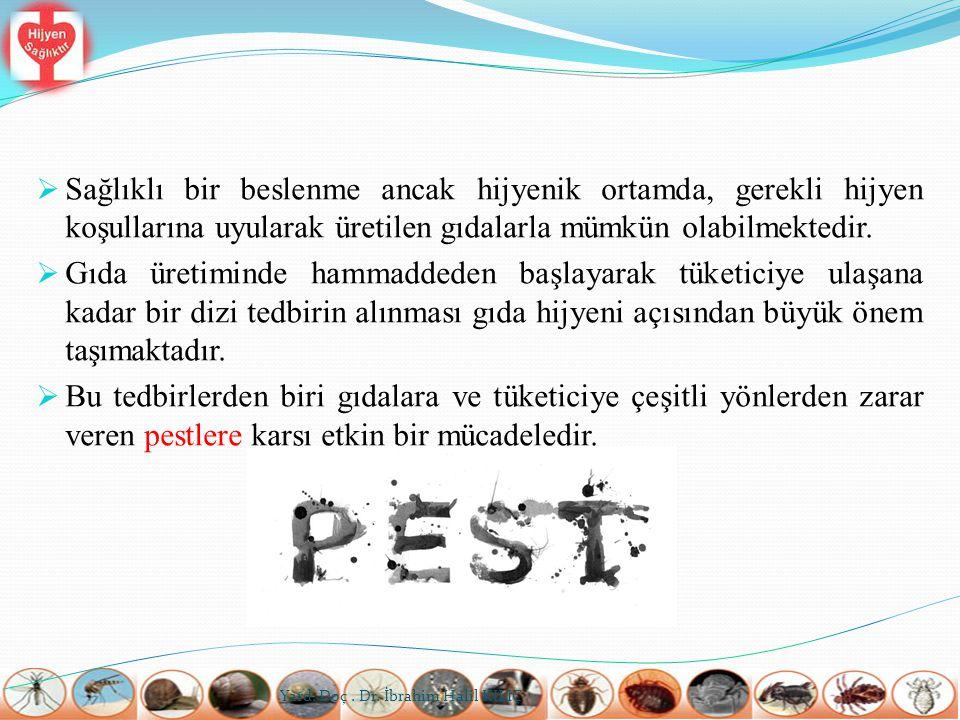  Hamam böceği, kalorifer böceği veya karafatma olarak adlandırılan insektlerle gıda üretim ve depolama alanlarında sıklıkla karşılaşılır.