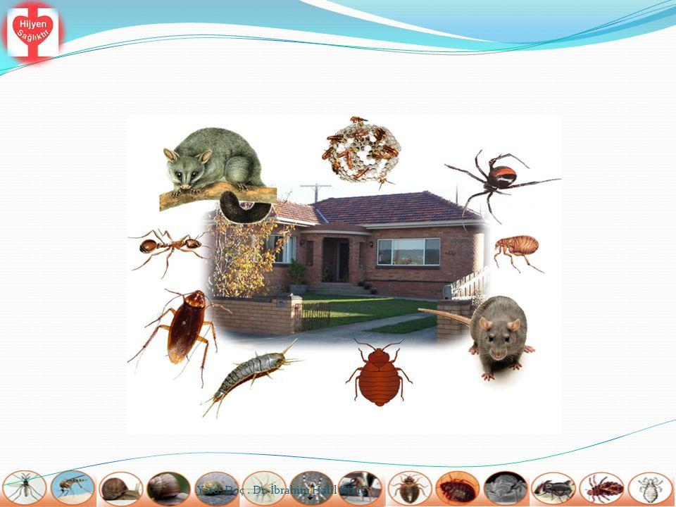  İşletme çevresi düzenli tutulmalı, rodentlerin kolaylıkla yerleşebileceği hurdalık vb.