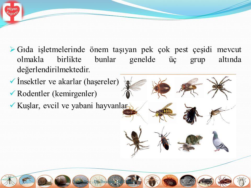 İNSEKTLER VE AKAR (MİTE) TÜRLERİ  Uçan ve yürüyen pek çok insekt çeşidi mevcuttur.