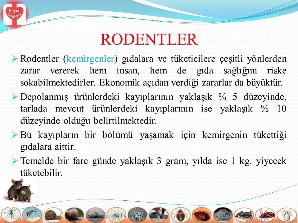 RODENTLER  Rodentler (kemirgenler) gıdalara ve tüketicilere çeşitli yönlerden zarar vererek hem insan, hem de gıda sağlığını riske sokabilmektedirler
