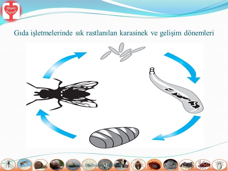 Mekanik Yok Etme  Ezme, vurma gibi mekanik yöntemler kullanarak insektlerin öldürülmesi çok eskilerden beri yapılmaktadır.