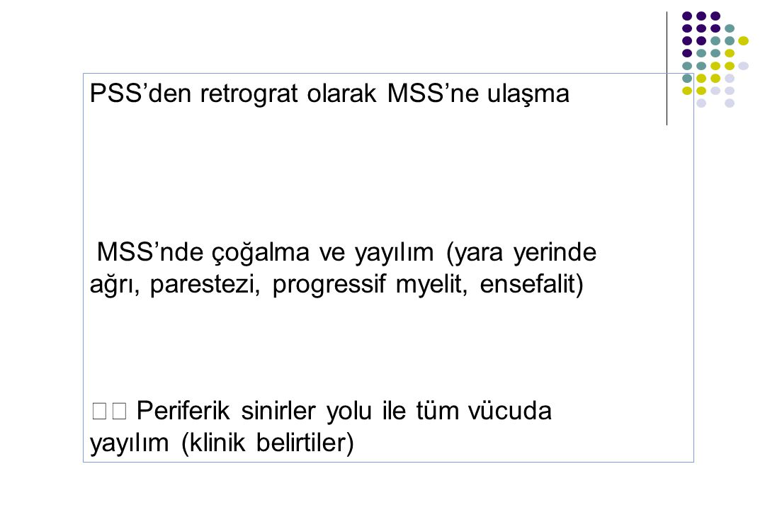 PSS'den retrograt olarak MSS'ne ulaşma MSS'nde çoğalma ve yayılım (yara yerinde ağrı, parestezi, progressif myelit, ensefalit) Periferik sinirler yolu